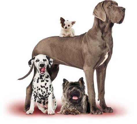 imagenes en png de animales alquiler de perros para uso personal
