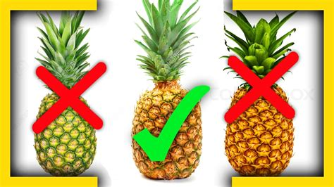 how to tell if is in how to tell if a pineapple is ripe