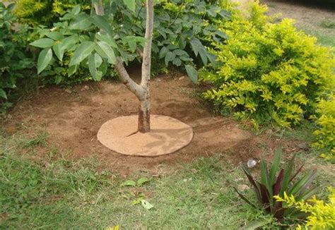 Mulch Mats For Trees by Coir Verde 24 Quot Coco Tree Rings Plant Cover