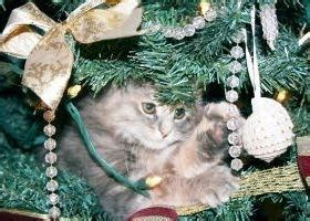 how to keep cats out of the christmas tree responsible pet ownership how to keep cats out of the tree
