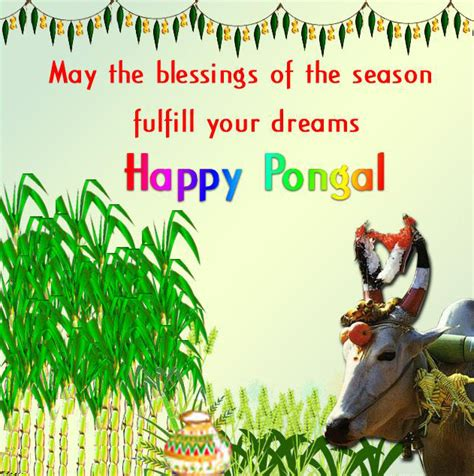 pongal wishes in english pongal greeting in english images pongal wishes in english photos