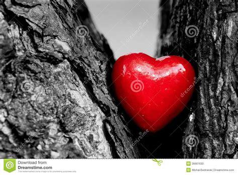 red heart   tree trunk romantic love stock photo