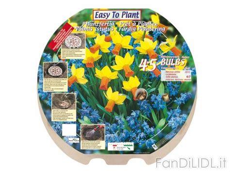 fiori lidl bulbi da fiore fiori fan di lidl