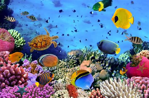 Under The Sea Wall Stickers underwater coral reef wall mural photo wallpaper by