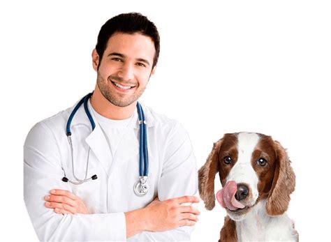 imagenes de medicas veterinarias veterinaria encuentra aqu 237 toda la informacion de esta