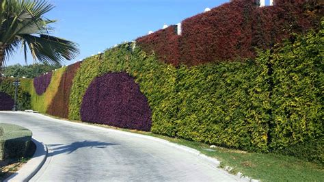 outdoor green wall atlantis aurora