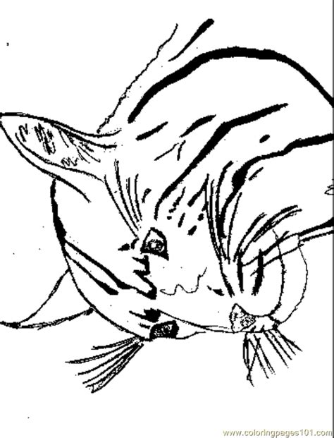 wildcat coloring page free cat coloring pages