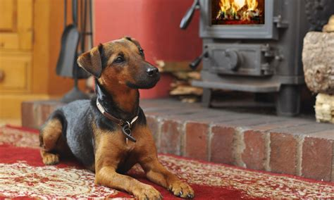 district dogs friendly cottages lake district book with lakelovers
