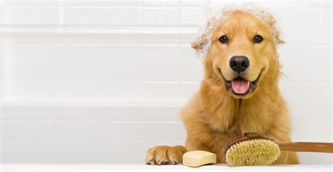 golden retriever and bad golden retriever smelly 11 things your can smell that you can t breeds