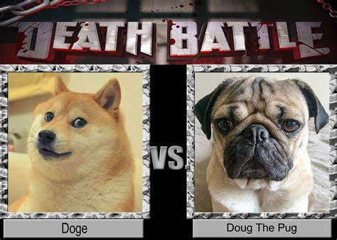 what is the difference between a pug and a bulldog battle doge vs doug the pug by lolmetaknight on deviantart