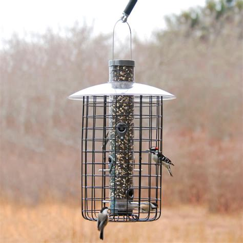 squirrel proof bird feeders driverlayer search engine
