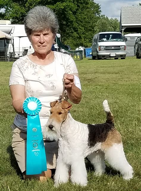 lorain county kennel lorain county kennel club nohs results saturday august 12 2017 canine chronicle