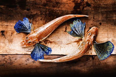 come cucinare le gallinelle di mare polpo e spada il meglio delle ricette dei mari sud italia