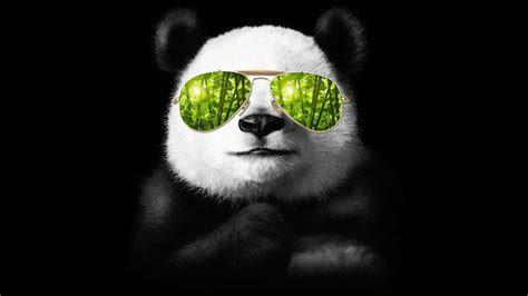 Cool Be Cool cool pictures of pandas www pixshark images