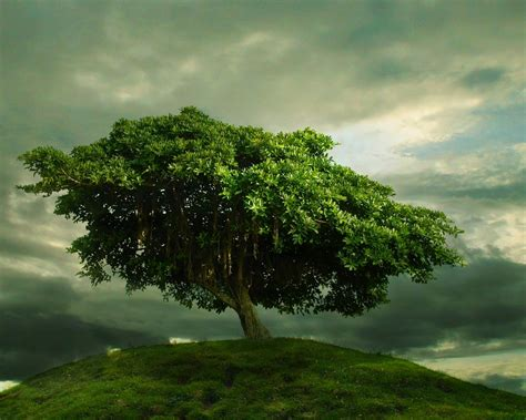 a tree green images one tree hill d wallpaper photos 19839104