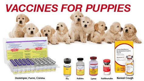 how much food does a puppy need how much are puppy care 4 your pets
