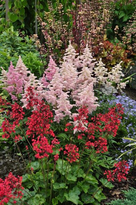 great perennials to plant in shade how does your