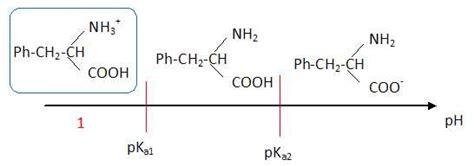 tracer un diagramme de prédominance synthse de l aspartame bac stl clpi 2012