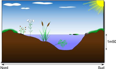 clipart mare clipart mare naturelle pond
