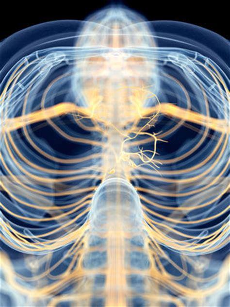 diaphragmatic breathing exercises   vagus nerve