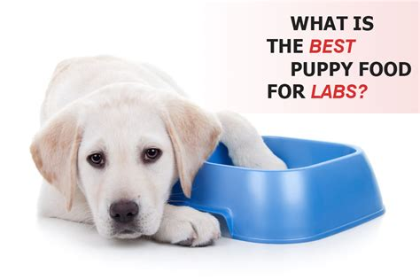 best puppy food for labs the 3 best puppy foods for labrador retrievers mysweetpuppy net