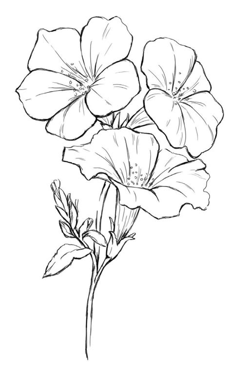 yellow elder coloring page how to draw a dogwood tree dogwood tree drawing collection