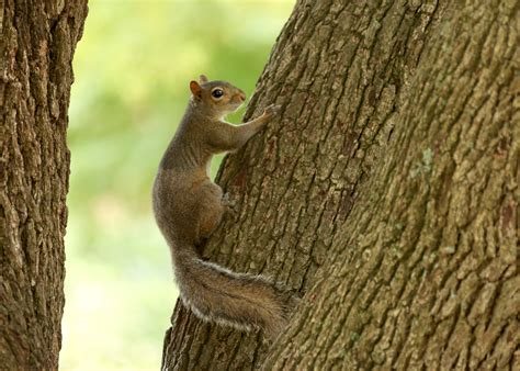 what to feed squirrels in backyard control manage squirrels on your property mississippi