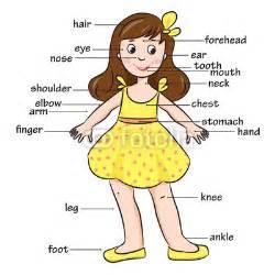 Cartoon child vocabulary of body parts vector illustration quot stock