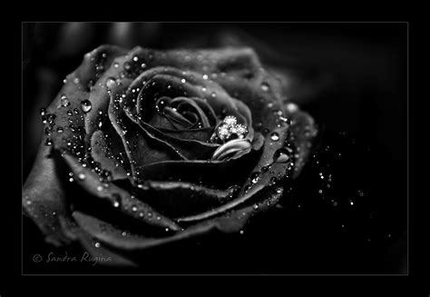 wallpaper mawar hitam hd black rose meaning amazing wallpapers