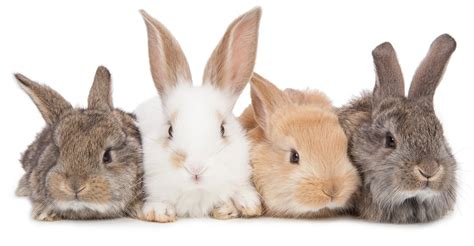 can rabbits see color rabbit colors the range of bunny colors and they