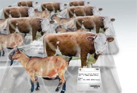 Harga Hewan daftar harga sapi dan kambing qurban 2018