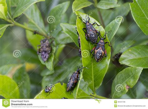 garden worms pests garden pests royalty free stock images image 30441739
