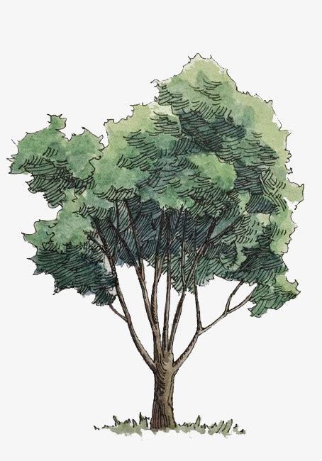 water color tree watercolor trees watercolor clipart watercolor green