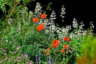 botanischer garten bielefeld gartenhof starke wirkung kr 228 uterwissen und hexenpflanzen 171 verein