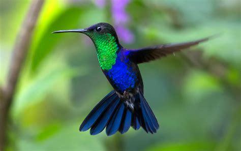 how to make hummingbird crack daily treasure