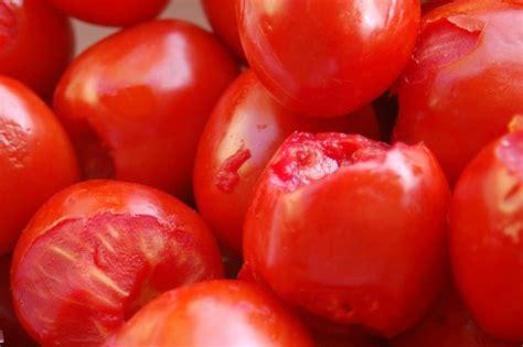 conserva fatta in casa conserve salsa di pomodoro fatta in casa mamma felice