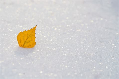 images hand nature snow winter white leaf