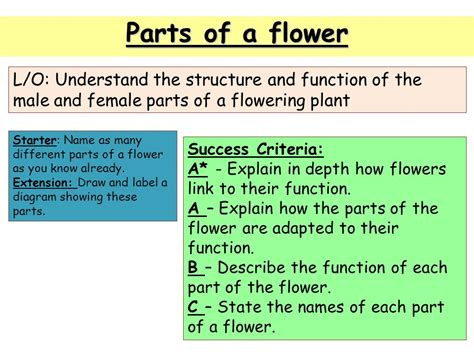 sections of library and their functions names and diagram of flowers images how to guide and