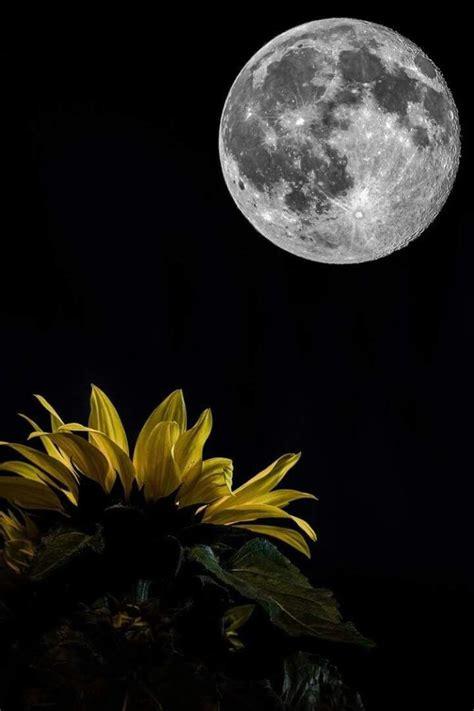 cuando sonries la luna tambin atortugadablogspotcom m 225 s de 25 ideas incre 237 bles sobre luna de b 250 ho en pinterest