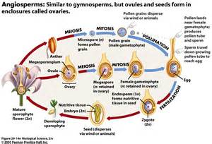 What Part Of A Flower Produces Pollen - biological sciences 2103 gt ferrer long gt flashcards