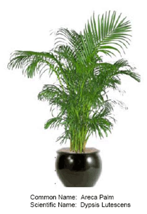 Standing Plant Medium indoor plants for offices and homes throughout san diego