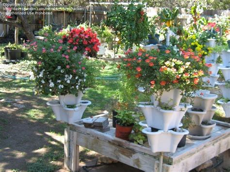 container gardening forum specialty gardening raggedy end of a summer container