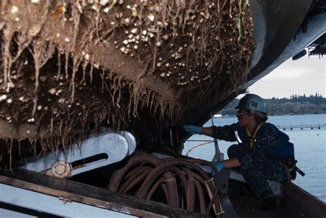 what are barnacles on a boat barnacle busting research targets ship biofouling