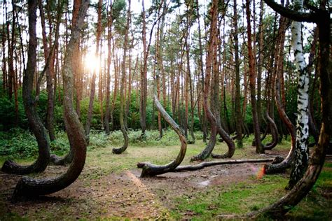 Crooked Forest Poland by 25 Of The Most Magnificent Trees In The World Page 13