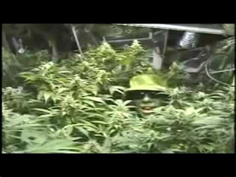 how to smoke pot in your room mr green how to build a basic indoor grow room step by step construction guide 1 of 9
