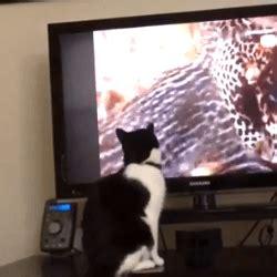 regarder oscar et le monde des chats regarder streaming vf en france un dr 244 le de chat tr 232 s curieux qui adore regarder la t 233 l 233