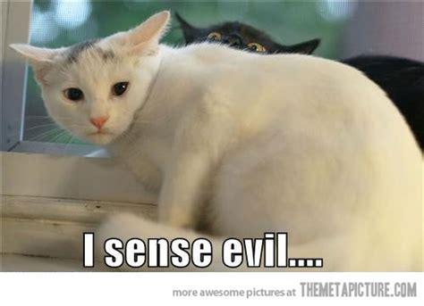 Soon Cat Meme - funny cats theferkel