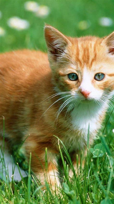 imagenes wasap gatos gatos wasap