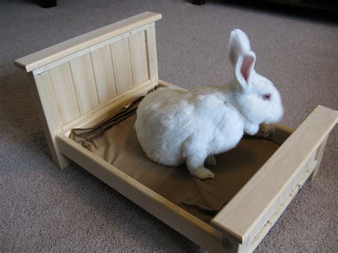 bunny rabbit small pet bed
