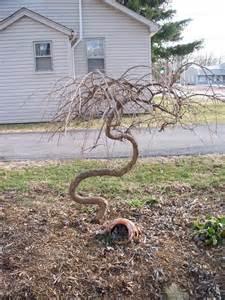 Garden Snake House The Zini Garden Snake Goes Green